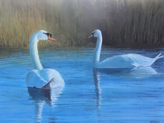 Two Swans on Pond or River - Surrey Art Gallery